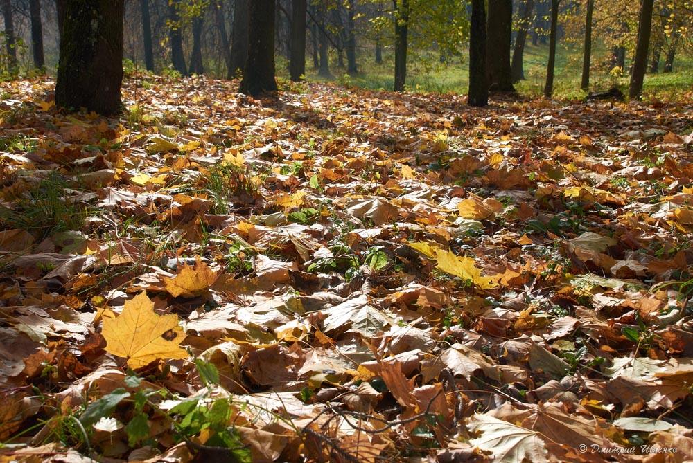 Картинки о природе об ноябре